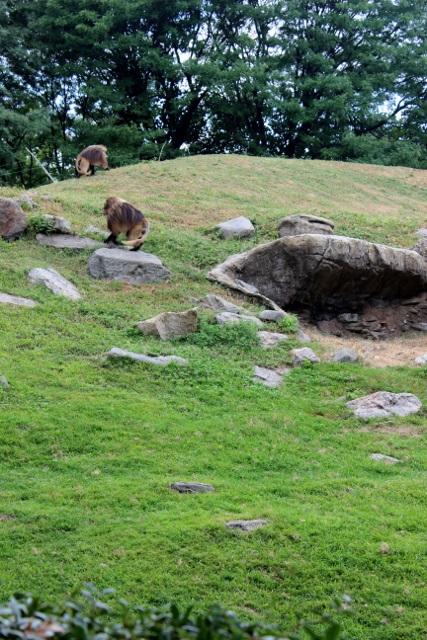New-york zoo du bronx (2)