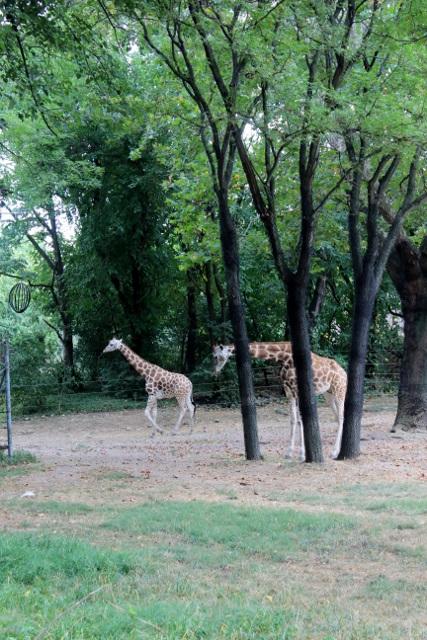 New-york zoo du bronx