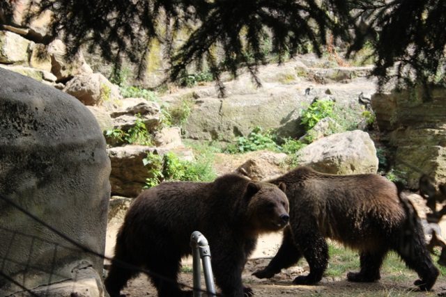 New-york zoo du bronx (13)