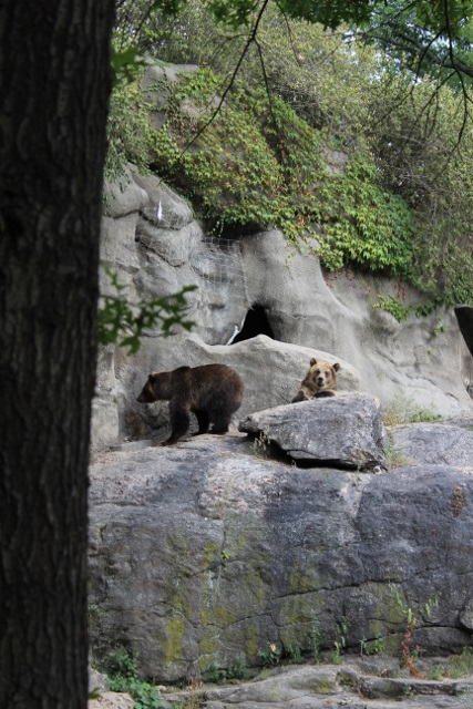 Nw-york zoo du bronx (15)
