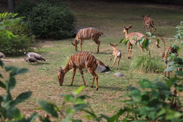 New-york zoo du bronx (19)