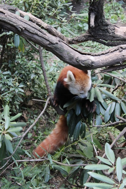 New-york zoo du bronx (7)