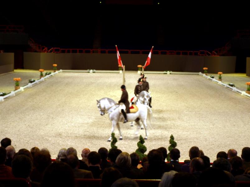 ecoled'equitation de vienne5